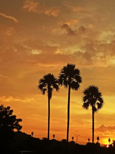 Palm Tree Tree Sunset Dramatic Sky Cloud - Sky Beauty In Nature Sky Scenics Outdoors