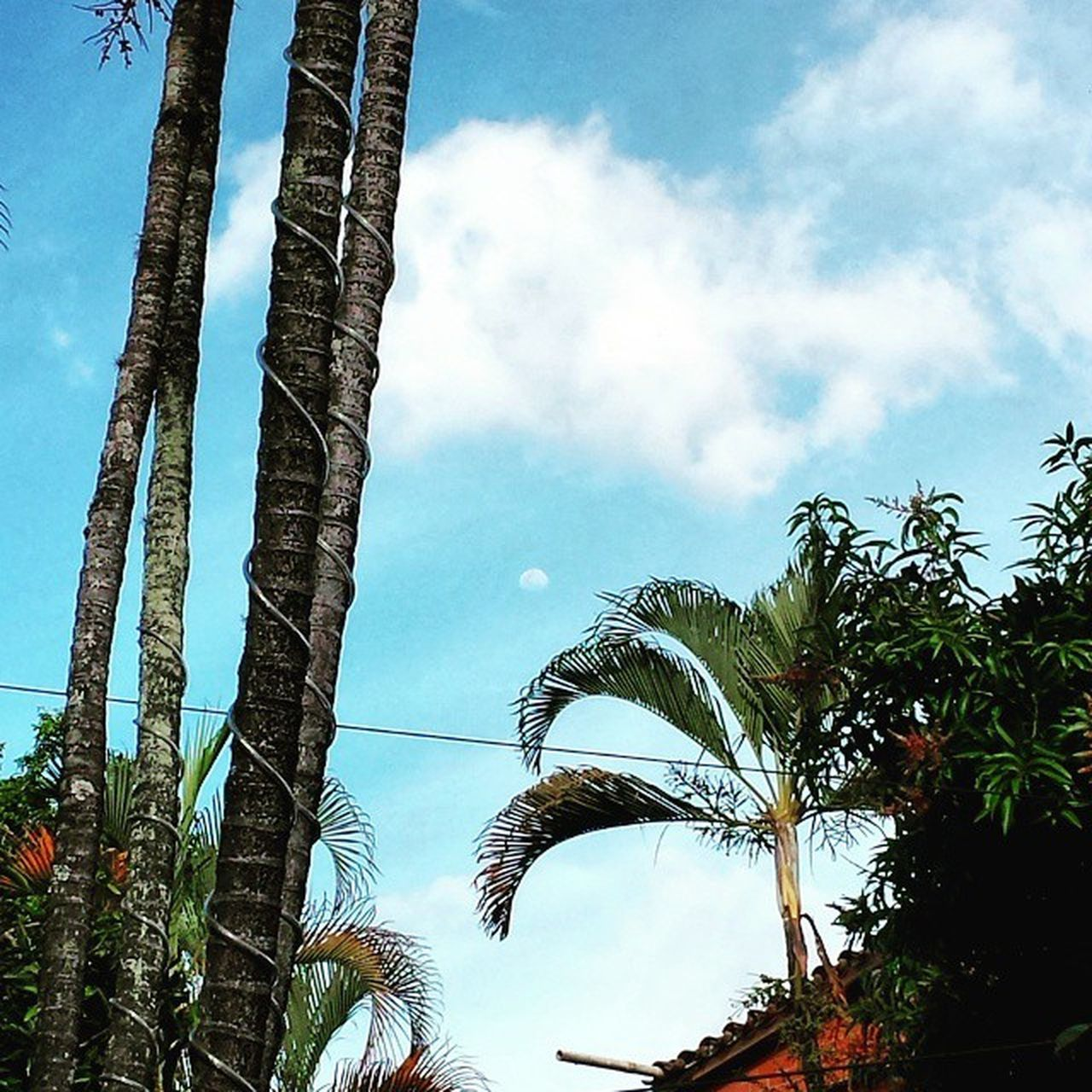 tree, sky, low angle view, growth, palm tree, day, cloud - sky, no people, architecture, tree trunk, outdoors, nature, built structure, plant, beauty in nature, building exterior, branch