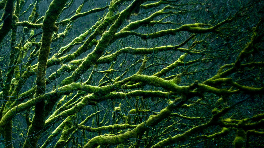 Backgrounds Full Frame Textile Tree Close-up Green Color Leaf Vein Natural Pattern Bark Green Greenery Leaves Plant Life