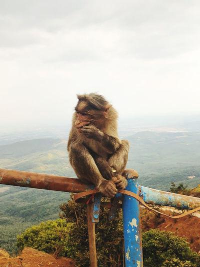 Monkey sitting on wood against sky