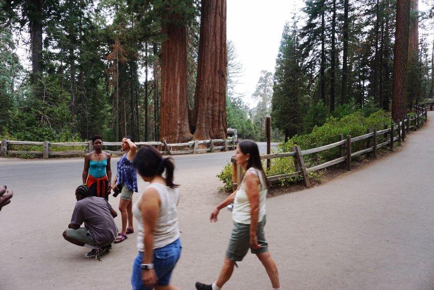Waiting Game Sequoia National Park Pixxzo People Walking
