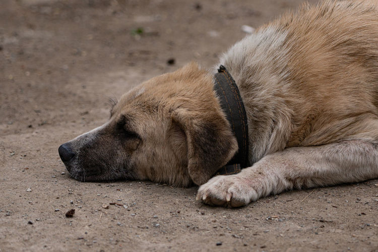 Close-up of a sleeping resting