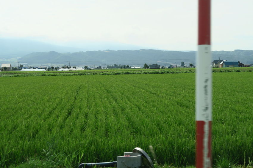 biei hokkaido japan Agriculture Biei Cloud Green Hokkaido Nature Paddy Sign Tree Building Flower Grouth Sky Summer Sunnyday