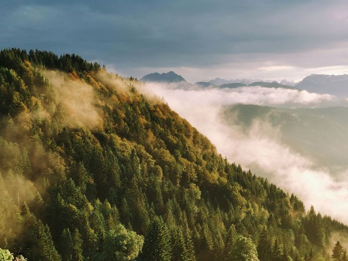 Sunset over a mountain forest in the alps with clouds over it
