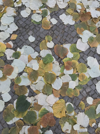 Autumn Colors Berlin Colors Abundance Autumn Boardwalk Boardwalk Scapes Change Close-up Cobblestone Day Full Frame High Angle View Leaf Linden Linden Tree Maple Nature No People Outdoors Pattern Stone Tile Street