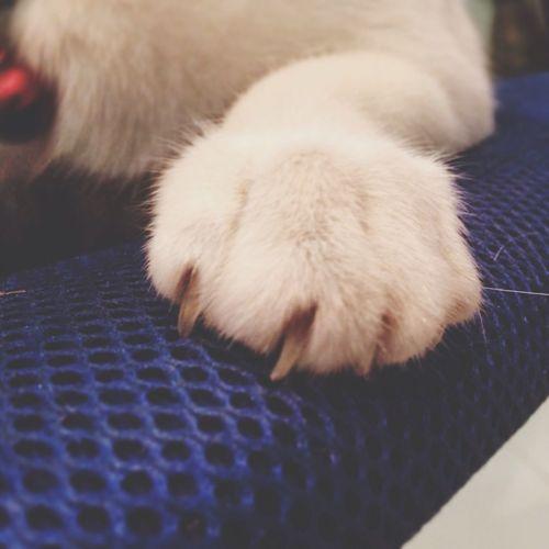 Cat's Paw Paws Cat