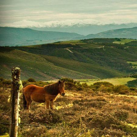 Asturias Mountains Montana Bobia Caballos Horses Nieve Verde Greenfields Asturiasgrafias Asturias_ig Ig_asturias Asturiasparaisonatural Asturgrafias Asturfoto