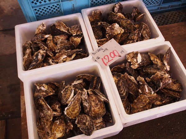 Oyster  Oysters カギ サロマ湖産 牡蠣