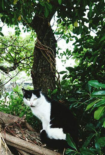 A certain Mr. B&W near a shrine in Naha, Okinawa. One Animal Tree Branch Outdoors Nature Stray Cat OKINAWA, JAPAN Cat