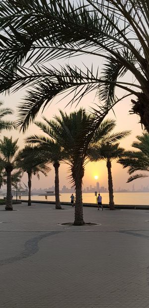 Sunset, Salmiya, Kuwait Tree Water Sea Beach Full Length Palm Tree Sunset Sand Silhouette Sky Seascape Wave Sand Dune Water Sport Coast Coconut Palm Tree Horizon Over Water EyeEmNewHere