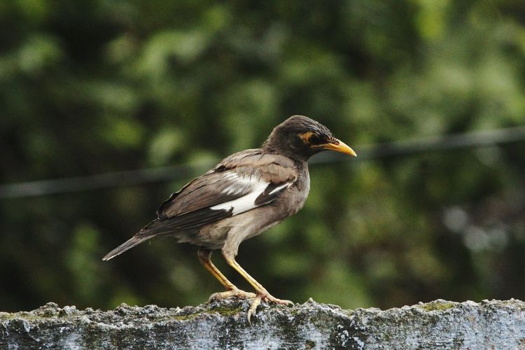 Bird Animal Wildlife Perching Animals In The Wild Focus On Foreground One Animal Side View Animal Themes Day Nature Close-up Outdoors No People Closing Full Length Beauty In Nature
