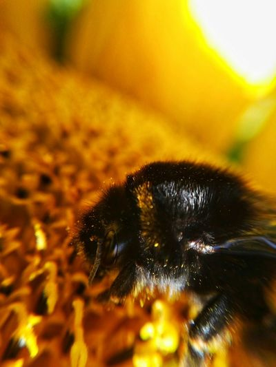 bumble on