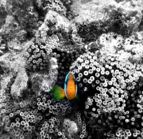 Noumea, Nouvelle Caledonie Hello World Taking Photos Monochrome Blackandwhite