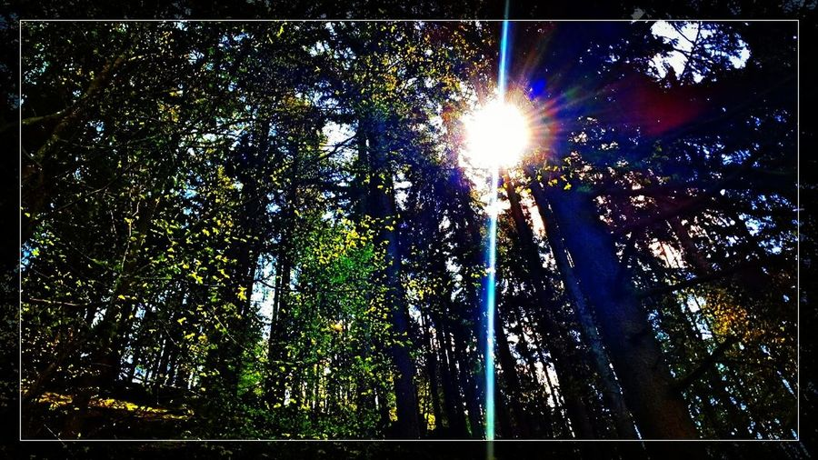 Beutiful  Besteymshot Taking Photos Art Summer Forrest Nature