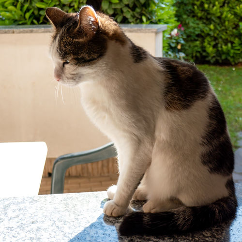 Close-up of a cat sitting on table