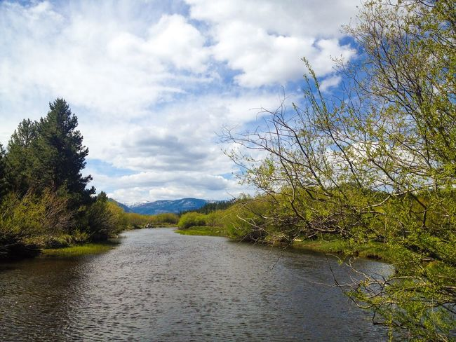 Truckee  River in South Lake Tahoe , Sierra Nevada Mountains Forest Meadow Outdoors