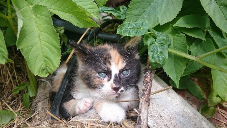 Kitty Kitten Kitty Cat Kitten 🐱 Kitten #adorable Adorable Check This Out The Essence Of Summer Nature Photography Cat Kitty!  Kittens <3