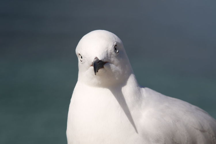 Animal Themes Animal Wildlife Animals In The Wild Beak Bird Close-up Day Nature No People One Animal Outdoors Watching At You White Color
