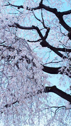 長い髪 EyeEm Flower CanonFD  Colors Streamzoo #oldlens