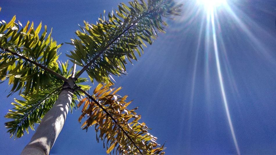 Tree Palm Tree Low Angle View Sky Nature Blue Day Sunlight No People Beauty In Nature Office Park No Filter No Filter, No Edit, Just Photography Nofilter Artistic Expression Morning Light Flower Nature Plant Green Color Clear Sky