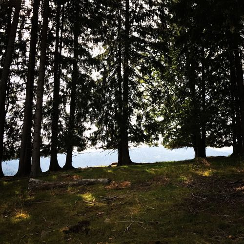 Nationalpark Bayerischer Wald National Bavarian Forrest Tree Nature Landscape Grass Tranquility Beauty In Nature Growth Tree Trunk Tranquil Scene Forest Outdoors Day No People Sky EyeEmNewHere