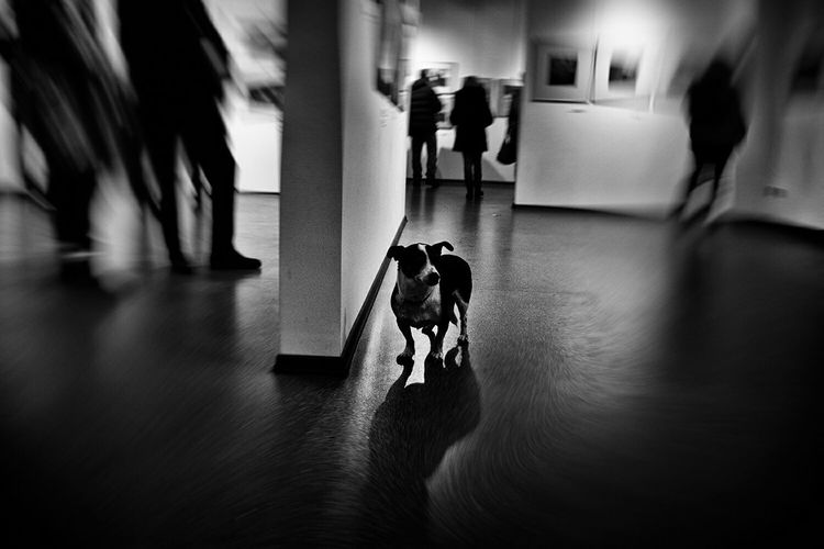 Dog and silhouette blur people in museum