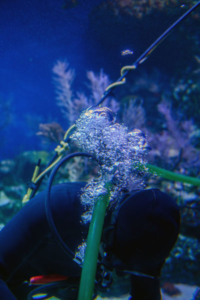 Aquarium Beauty In Nature Bubbles Close-up Day Eyeem Philippines Flower Fragility Growth Nature No People Outdoors Plant Scuba Diver Scuba Diving UnderSea Underwater Underwater Bubbles Done That.