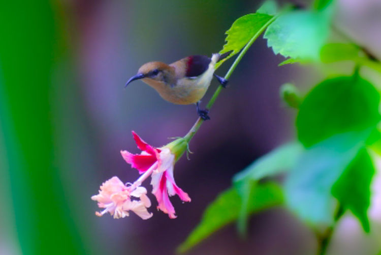 Close-up of hummingbird on pink flower