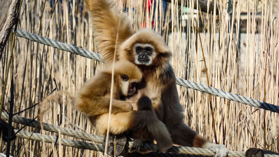 Primate Mammal Animal Wildlife Animals In The Wild Group Of Animals Young Animal Vertebrate Sitting No People Two Animals Animal Family Nature Togetherness Ape Tree Day Care