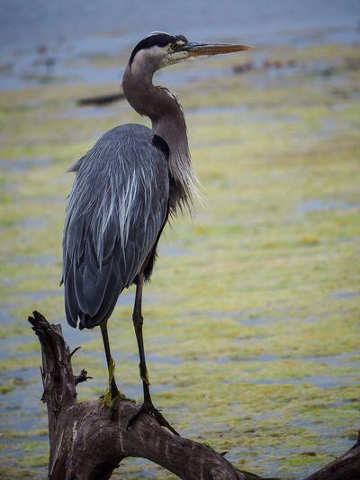 Bird perching on driftwood against lake