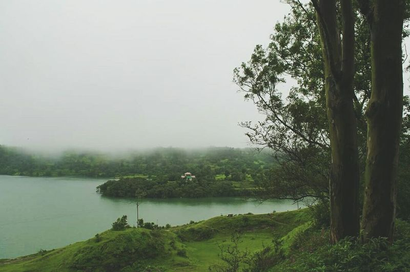Tree Tranquil Scene Water Tranquility Lake Scenics Non-urban Scene Beauty In Nature Green Color Nature Lakeshore Calm Tree Trunk Day Riverbank Sky Growth Bhandardara Tourism Maharashtra Maharashtra_ig Maharashtratourism