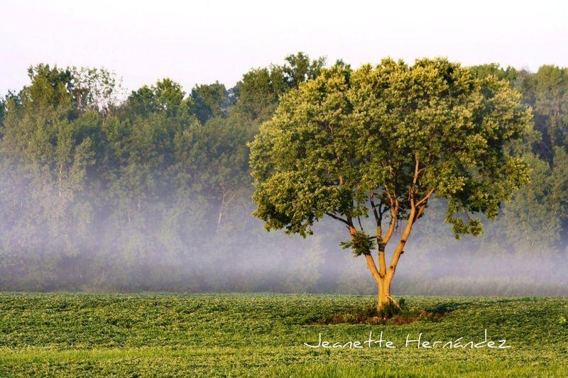 My favorite meditation spot with fog. From 2013 Tree Fog Streamzoofamily StreamzooPics