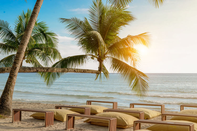 Water Sea Palm Tree Sky Tree Beach Tropical Climate Land Scenics - Nature Horizon Over Water Beauty In Nature Horizon Nature Plant Tranquility Tranquil Scene No People Chair Day Outdoors Palm Leaf Coconut Palm Tree Tropical Tree Relaxing Vacations Sand Sofa Palm Tree