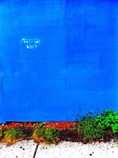 Post No Bills Abandoned Blue Color Environmental Conservation Growth Outdoors Pattern Plants Text Wall Western Script