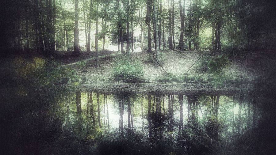 magic forest.... Kromlauer Park Kromlau Green Color Wald Park Waldweg Sea Reflection Tree Water Reflection Forest Close-up Wet Plant Life Woods Countryside Standing Water Lakeside Greenery WoodLand Calm Lake Flora Green