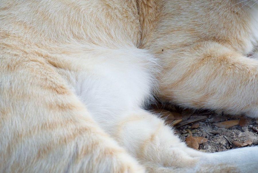 Animal Themes Animal Mammal Cat Pets One Animal Feline Vertebrate Domestic Domestic Cat Domestic Animals No People Close-up Animal Body Part Relaxation Animal Hair Hair