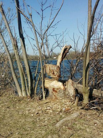 Easter Bunny Easter Bunny  Bunny 🐰 Osterhase Hase Holz Wood Wood Art Beaver Biber Beaver Work Biberkunst