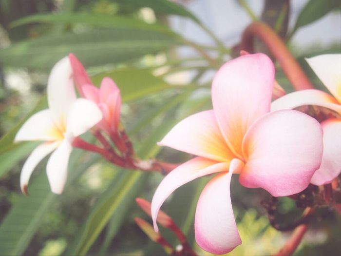 Flower Porn Flower Collection Garden