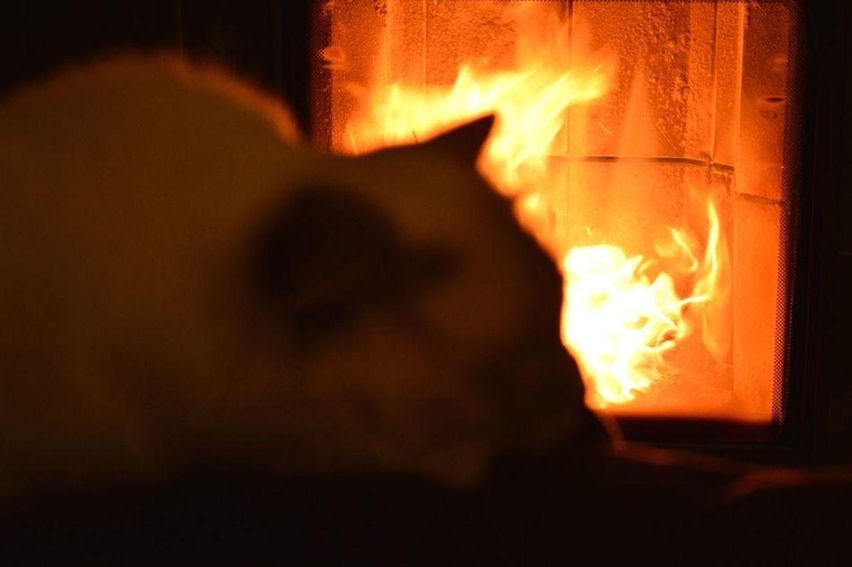 Heat - Temperature Flame My Cat♥ Birmancats Fire - Natural Phenomenon Lonewolf