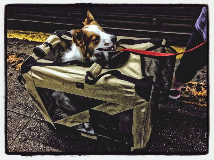 dog in crate on subway waiting for train MTA~ Subway Station EyeEm Best Shots AMPt_community