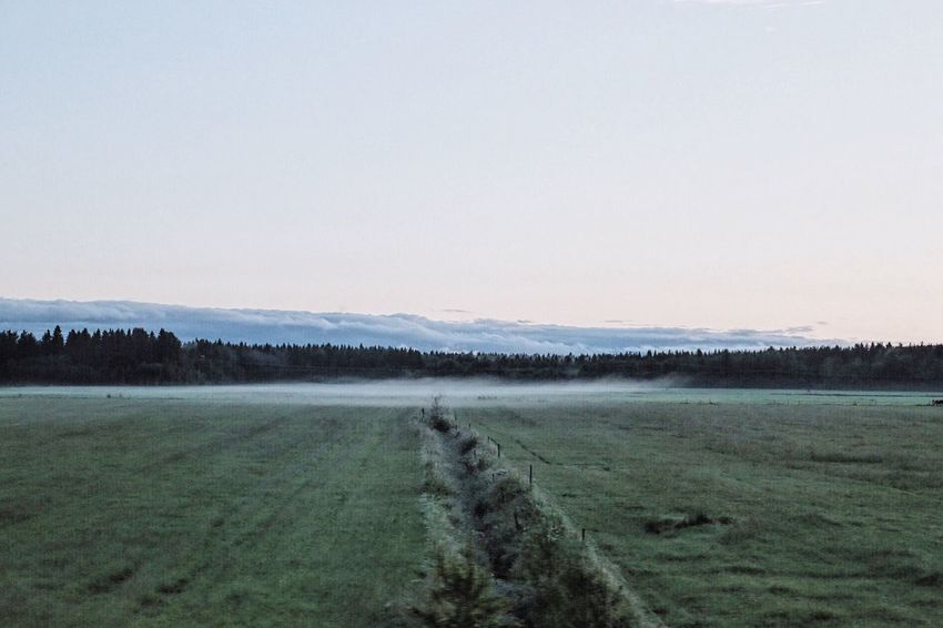 Background Environment Environmental Early Morning Fog Nature Photography Nature_ Collection  Early Open Landscape Landscape_photography Field Forest Meadow Artistic Photo Artphoto Tranquil Scene Tranquility Tranquil Silence Silent Landscape Silent Place Open Landscape Landscapes With WhiteWall