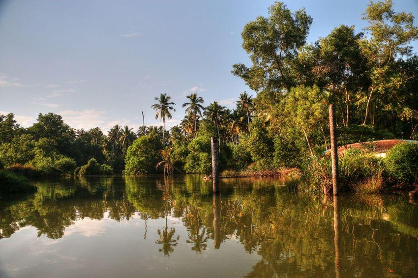 Kerala India Neyyardam Palm Trees Palm Tree India Indianphotography Indiapictures Indiatravelgram Indiaphotosociety India_ig