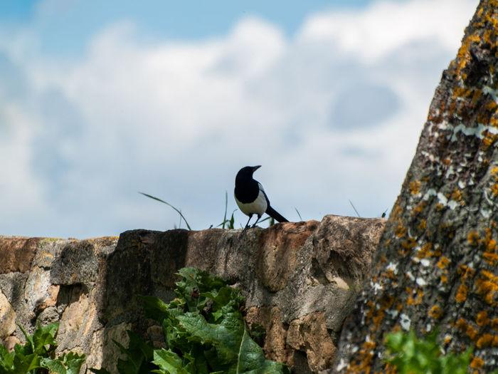 Bird perching on a rock