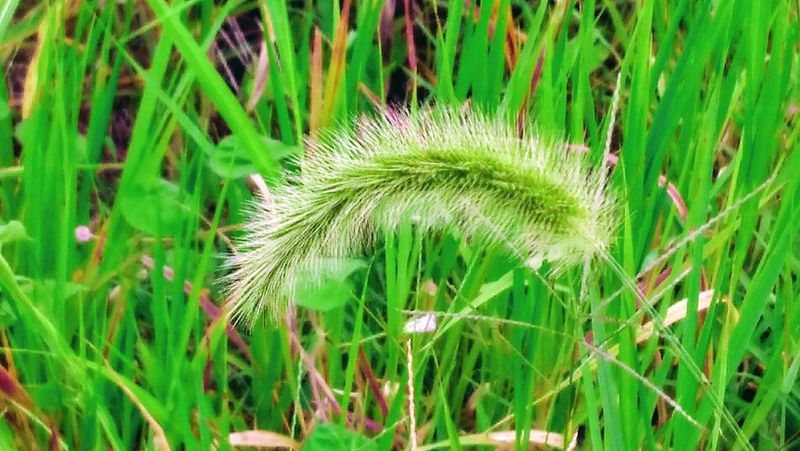 Growth Green Color Nature Plant Grass Beauty In Nature Day No People Field Outdoors Close-up Leaf Freshness Fragility Cattail The Week On EyeEm