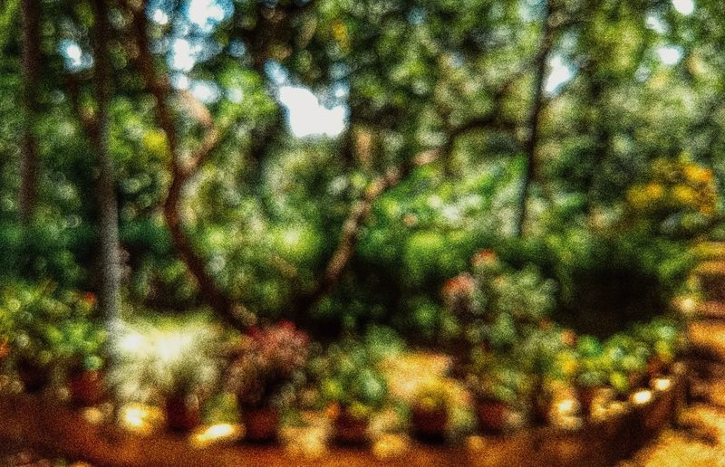 #tree #grain #Garden #Bokeh #phokeh #detail #MobilePhotography Backgrounds