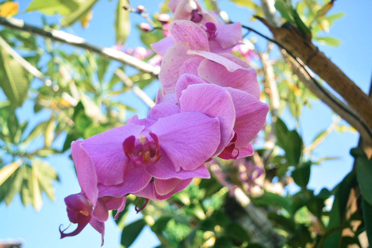 Low angle view of pink flowering plant