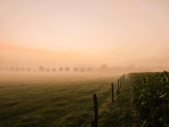Scenic view of farm field against sky during sunrise on foggy weather