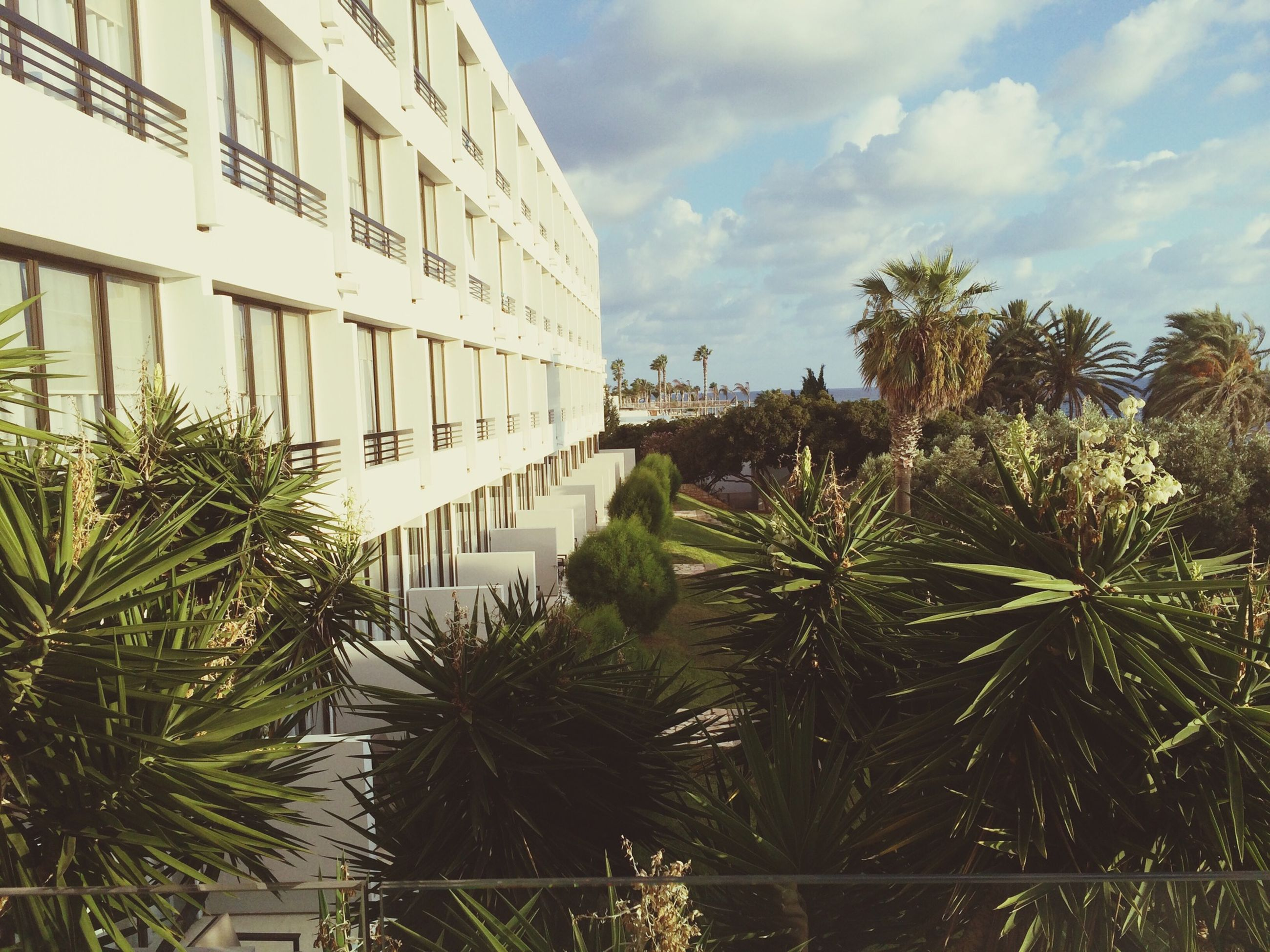 architecture, building exterior, built structure, sky, tree, palm tree, growth, plant, cloud - sky, water, cloud, building, city, day, residential building, outdoors, green color, no people, nature, low angle view