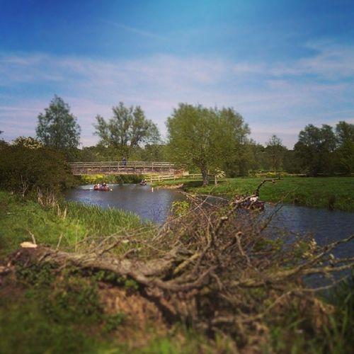 Dedham Essex Walk Riverstowe spring nature fenbridge branches