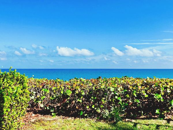 Blue Skies Florida Life Florida Ocean View Ocean Sea Sky Horizon Over Water Nature Scenics Beauty In Nature Plant Tranquility Tranquil Scene Cloud - Sky Water Day Outdoors Blue